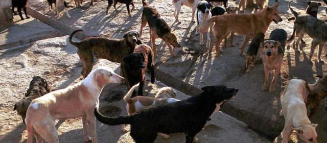 Evalúan aplicar eutanasia a perros por superpoblación, en Comodoro Rivadavia, Chubut
