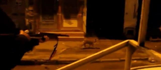 Una «patrulla santitaria» mata a tiros a 57 perros callejeros en Marruecos