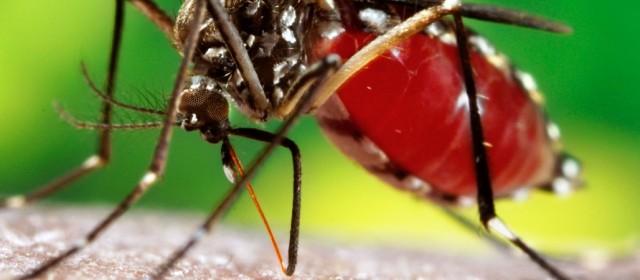 Desde el ministerio de Salud confirman 76 casos de dengue en Santiago