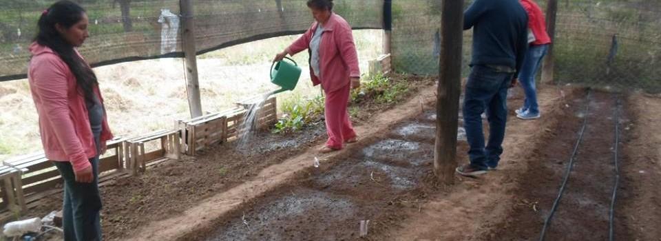 Brindan asesoramiento en cultivos experimentales y huertas comunitarias