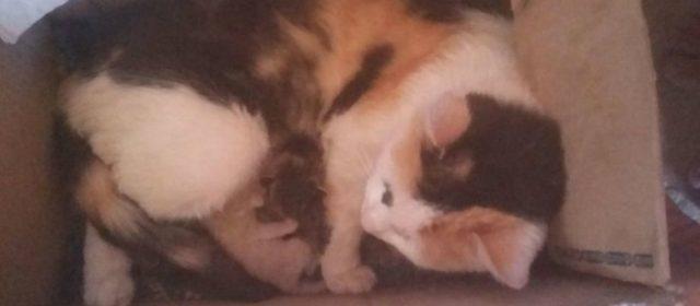 Un gato de dos caras sorprende a todos en San Luis