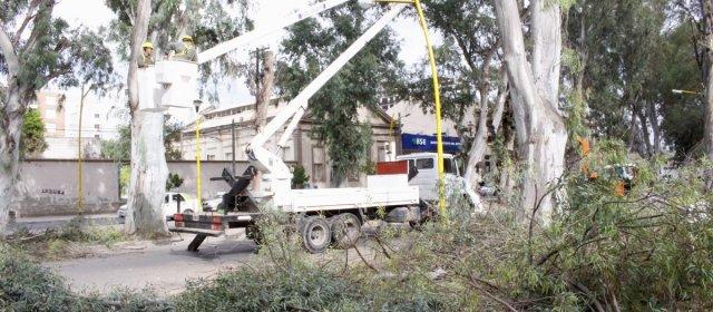 Poda preventiva de árboles en el Parque Aguirre