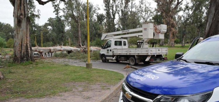 El municipio trabajó en el levantamiento y retiro de árboles y ramas caídas por los fuertes vientos