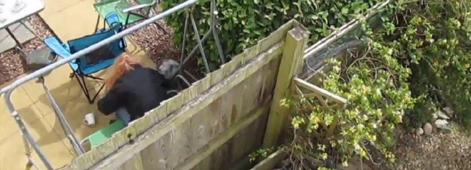Condenan a prisión a una mujer por golpear brutalmente a su cachorro