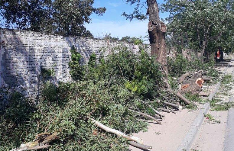 El municipio brindó asistencia en los barrios por la caída de ramas a raíz de los fuertes vientos