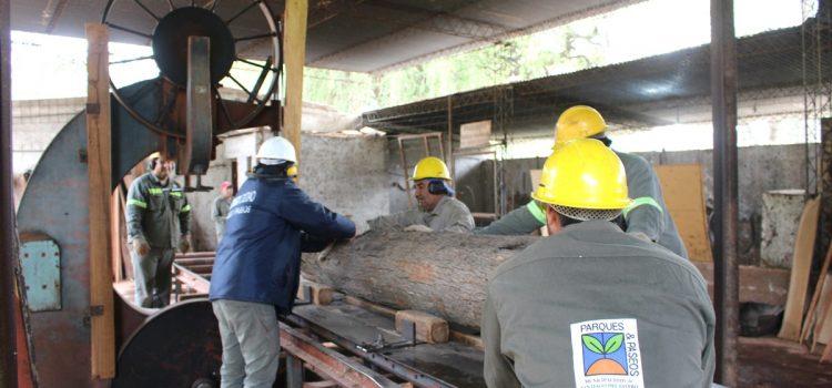 El municipio reutiliza árboles caídos para fabricar muebles y cartelería