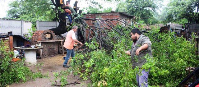 El municipio está abocado a la tarea de poda y tala de árboles en peligro de caer