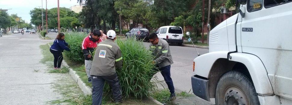 Se concretó la poda y limpieza de importantes espacios de la ciudad