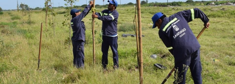 El municipio realizó una nueva plantación en el acceso oeste