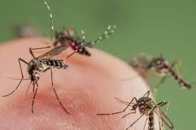 El Ministerio de Salud informa sobre la proliferación de mosquitos en la ciudad