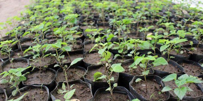 La entrega de árboles en el vivero comenzará en mayo