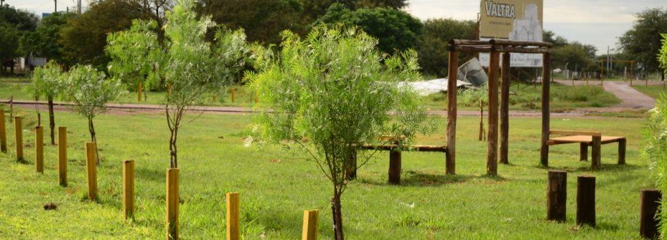 En lo que va del año se colocaron mas de 1000 plantas en Quimili