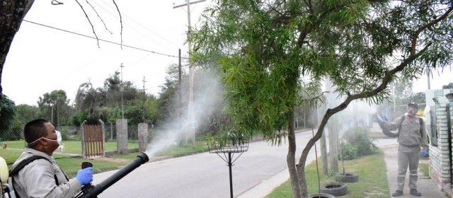 Solicitan a vecinos consultar las medidas apropiadas ante la aparición de plagas en thevetias