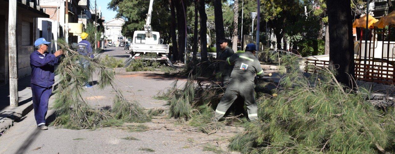 El municipio trabaja en la poda de árboles en veredas y espacios verdes del centro
