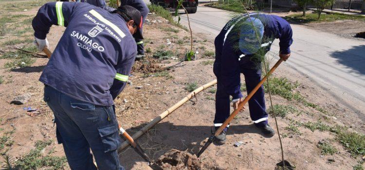 El municipio ya plantó más de 40.000 árboles en la ciudad en lo que va del año