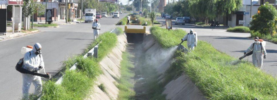 La Municipalidad avanzó con fumigaciones en otros 12 barrios