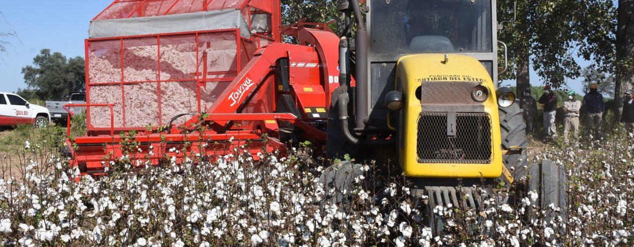 Nueva maquinaria para la cosecha  de algodón de nuestra provincia