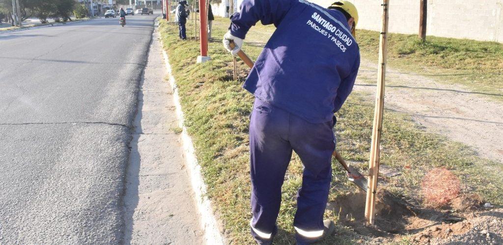 La Capital concretó nuevas plantaciones de árboles